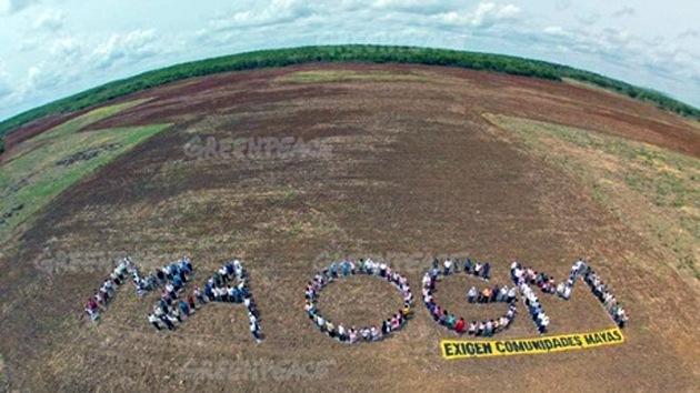 Apicultores mexicanos 'ganan la batalla' contra Monsanto