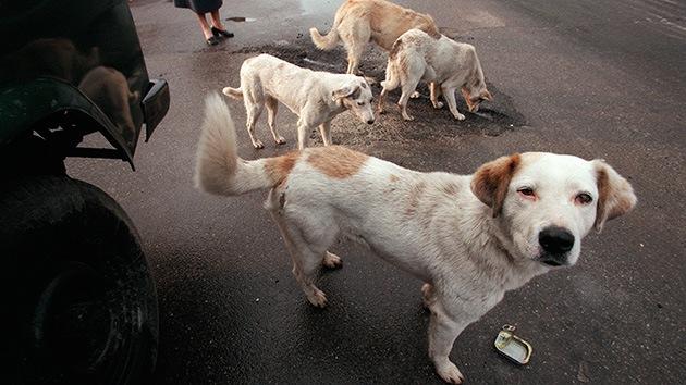 Argentina: Perros callejeros salvan a una niña de 12 años de las garras de un violador