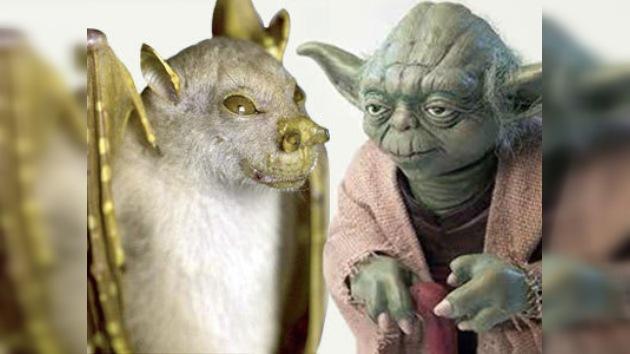 ¿Proviene el Maestro Yoda de Papúa Nueva Guinea?