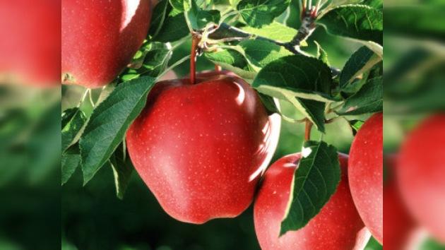 La historia real de la manzana de Newton sale a la luz por primera vez
