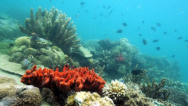 Descubren en el Golfo de México uno de los mayores arrecifes de coral del mundo