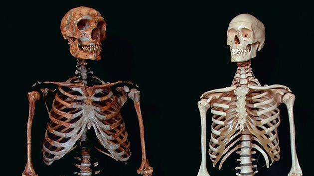El Homo Sapiens 'mira por encima del hombro' a sus antepasados