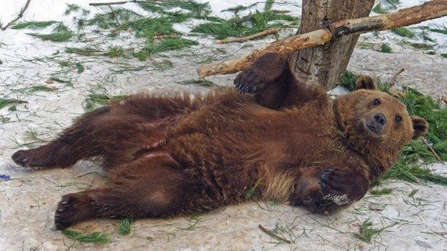 Los animales de un zoo ucraniano podrían morir de hambre