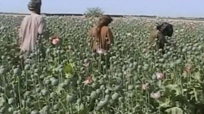 Kein Gehalt aus Kabul: Polizisten verkaufen US-Waffen an Taliban