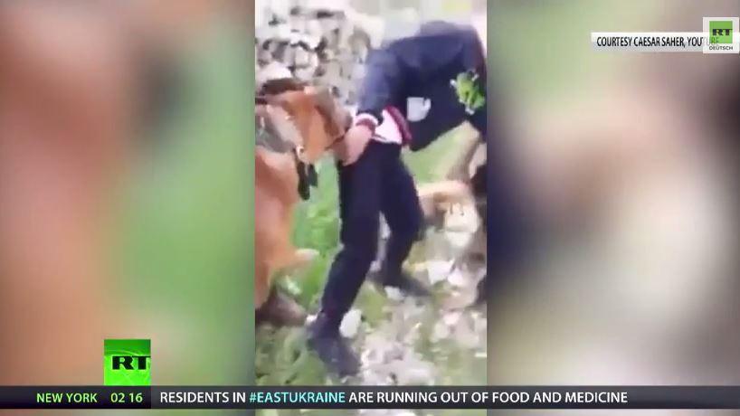 Israelische Soldaten setzen Hunde gegen palästinensischen Jungen ein