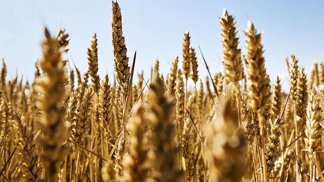 """""""Weder Anbau noch Import"""" - Russland bekräftigt Nein zu gentechnisch modifizierten Nahrungsmitteln"""
