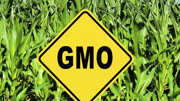 Schottland will Anbau von GMO-Saatgut verbieten