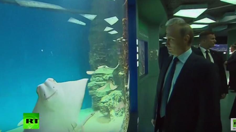 """Moskau: Putin besucht Europas neues und größtes """"Mehrzweck-Aquarium"""""""