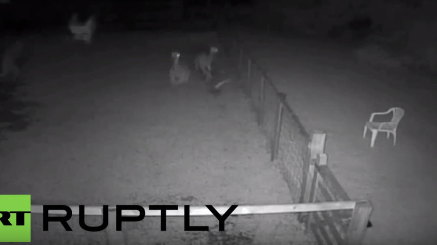 England: Polizei veröffentlicht Tierquäler-Video