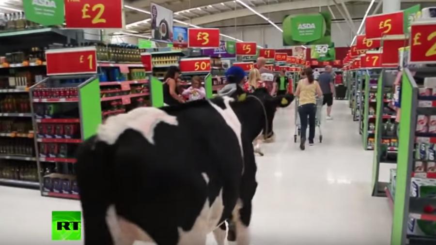 Auch in England Protestwelle der Landwirte: Demonstranten bringen Kühe mit in Supermarkt
