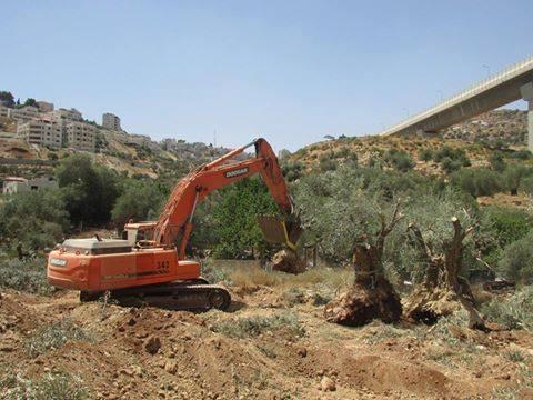 Israelische Bulldozer beim Rausreißen von tausendjährigen Olivenbäumen für den Bau von Siedlungs- und Speeranlagen in Wad Ahmad im Westen von Bethlehem
