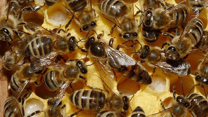 US-Gericht verbietet Einsatz von Bienenkiller-Insektizid - In der EU ist der Giftststoff weiterhin zugelassen