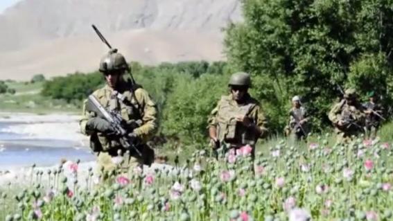 Gerüchte halten sich: CIA hilft beim Opium-Export aus Afghanistan
