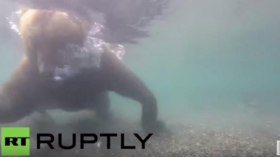 Beeindruckende Bären-Aufnahmen an einem der schönsten Orte Russlands entstanden