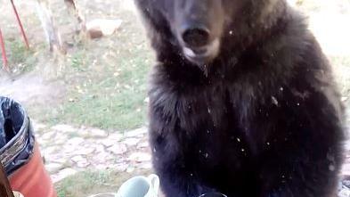 Sibirien – Wenn ein Braunbär sich selbst zum Frühstück in der Datscha einlädt