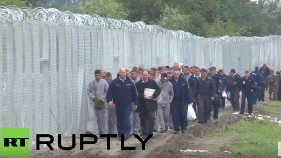 Häftlinge stellen Zaun gegen Flüchtlinge an Ungarns Grenze fertig