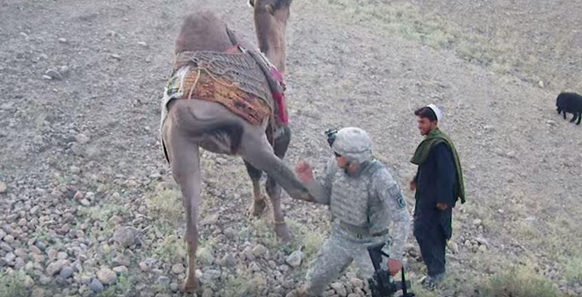 Mehr lesen: US-Soldat in Afghanistan nähert sich Kamel – Doch dies zeigt sich von seiner anti-imperialistischen Seite