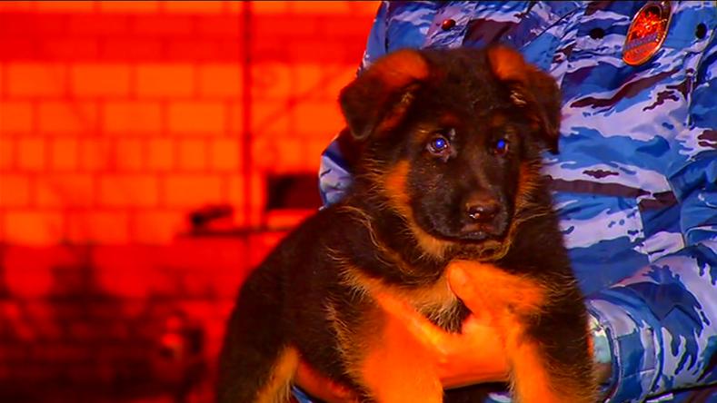 Geste der Unterstützung: Russland schenkt Frankreich nach Tod von Polizeihund einen Welpen
