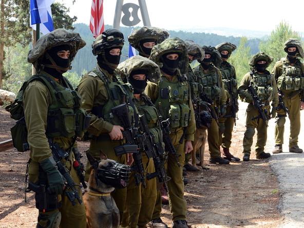 Menschenrechtsgruppe: Niederlande beliefern Israel mit Kampfhunden zum Einsatz gegen Palästinenser