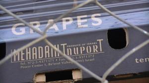 Israelische Weintrauben aus besetzten Gebieten im Westjordanland - Bald mit EU-Konsumentenwarnung versehen
