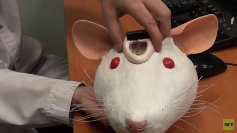 Russland: Cyborg-Ratten als effektive Waffe im Kampf gegen Terror?
