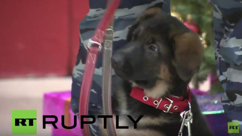 """Moskau: Schäferhundwelpe und """"Ersatz-Polizeihund"""" Dobrinja offiziell an Frankreich übergeben"""
