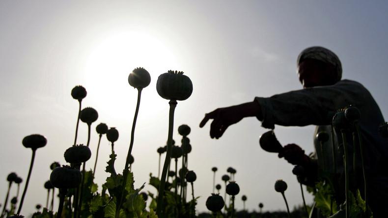 Russische Anti-Drogen-Behörde: Afghanisches Opium wird in türkischen Laboren zu Heroin für Europa
