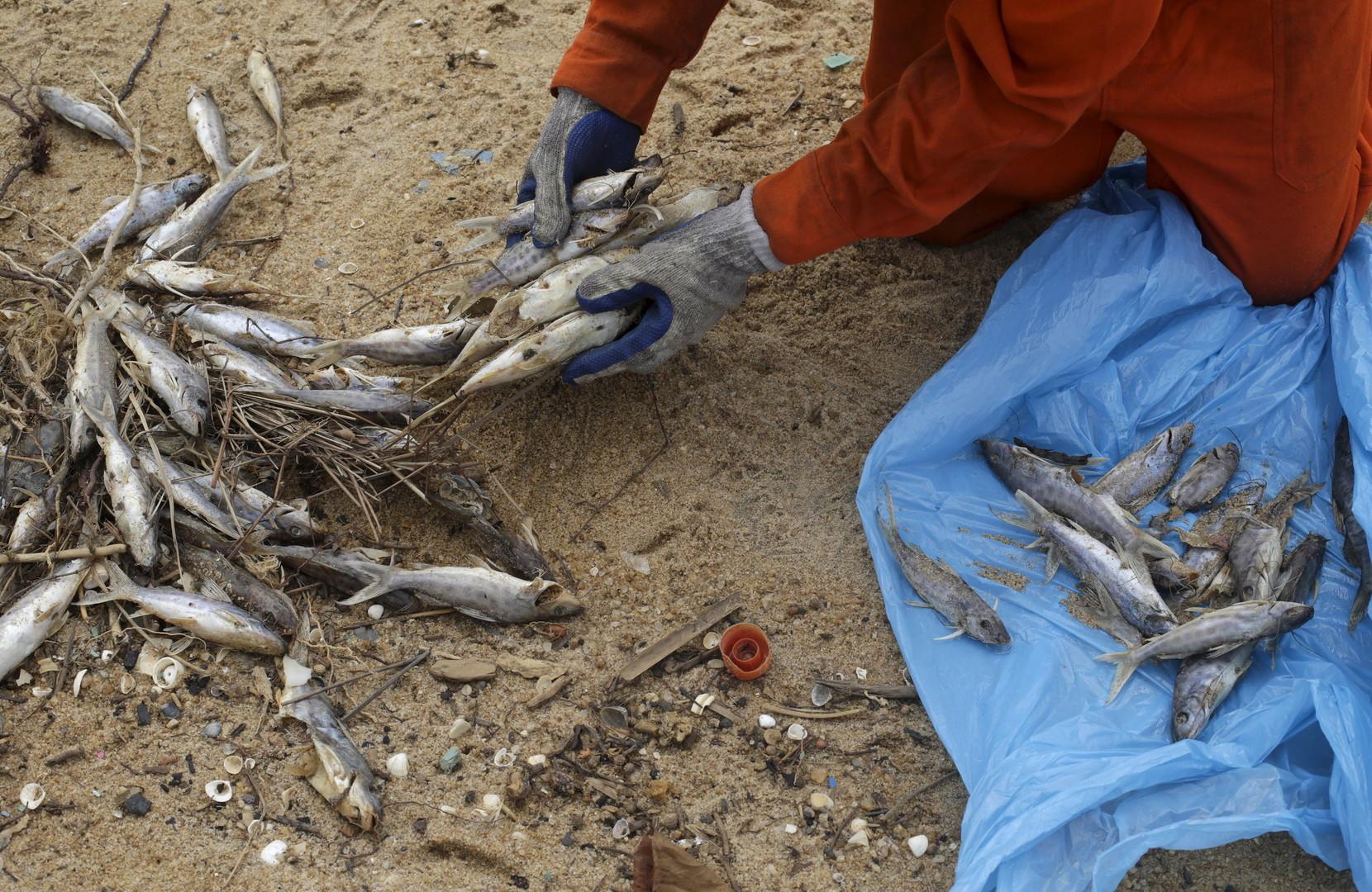 Ein lokaler Fischer entsorgt Fischkadaver, nachdem sich 62 Millionen Kubikmeter hochgiftigen, mit Arsen, Blei, Kupfer und Quecksilber verseuchten Schlamms in die Landschaft und den Rio Doce ergossen