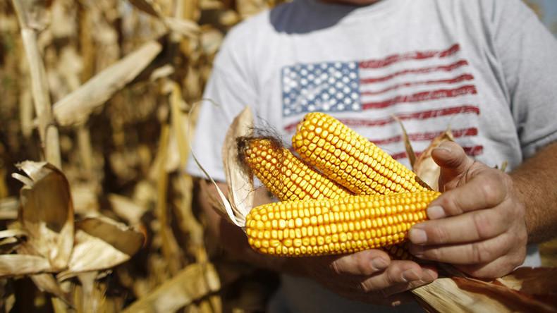 Keine GMOs erwünscht: Russland denkt über Importverbot für US-Sojabohnen und Mais nach