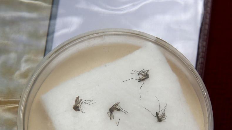 Live: WHO Pressekonferenz zum Zika-Virus