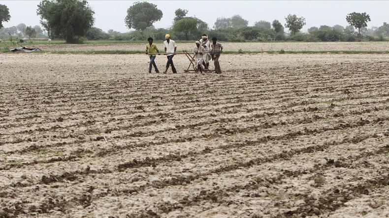 Lizenzgebühren-Streit: Monsanto droht mit Rückzug aus Indien