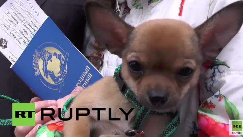 """Krim: """"Ich habe noch nie vor Glück geweint"""" - Putin schenkt Flüchtlingsmädchen einen Welpen"""