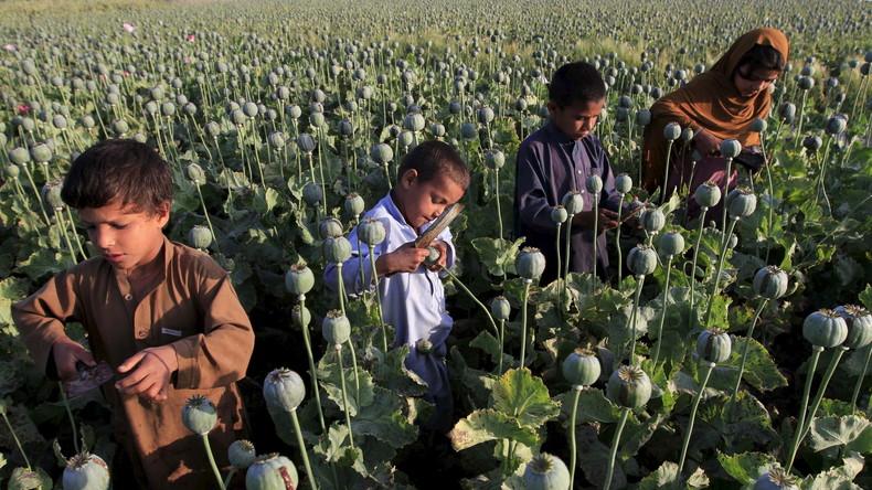 """US-Kongress: """"Die Drogenbekämpfung in Afghanistan  ist gescheitert"""""""