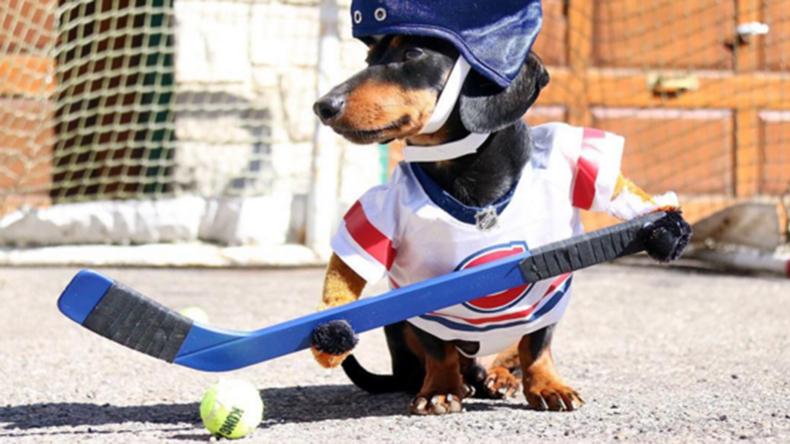 Dackel goes viral: Crusoe spielt Hockey und geht auf die Jagd