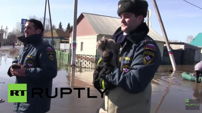 """Russland: Tiere nach schwerer Überschwemmung aus Mini-Zoo """"Arche Noah"""" gerettet"""