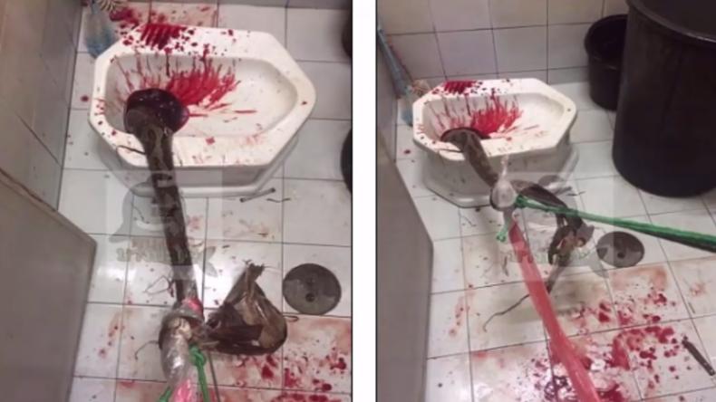 Männeralbtraum: Riesiger Python beißt sich bei Toilettengang in Penis fest
