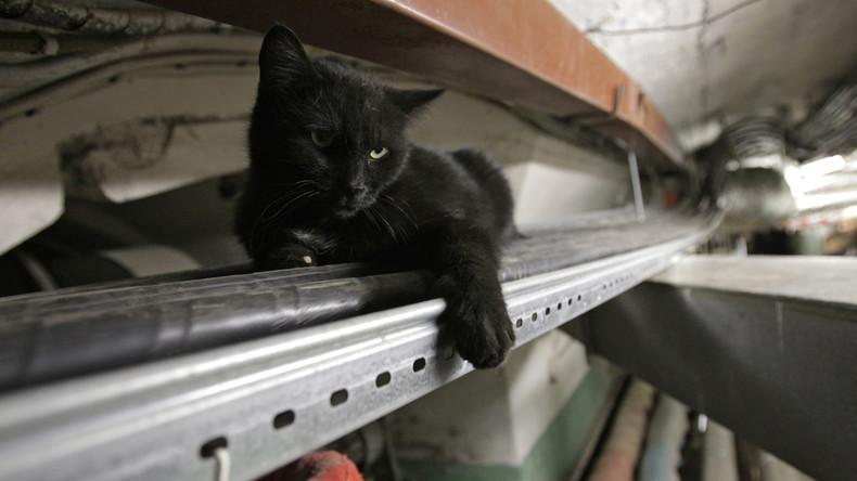 Legendär seit Jahrhunderten: Die Katzen der Petersburger Eremitage als Museumswächter