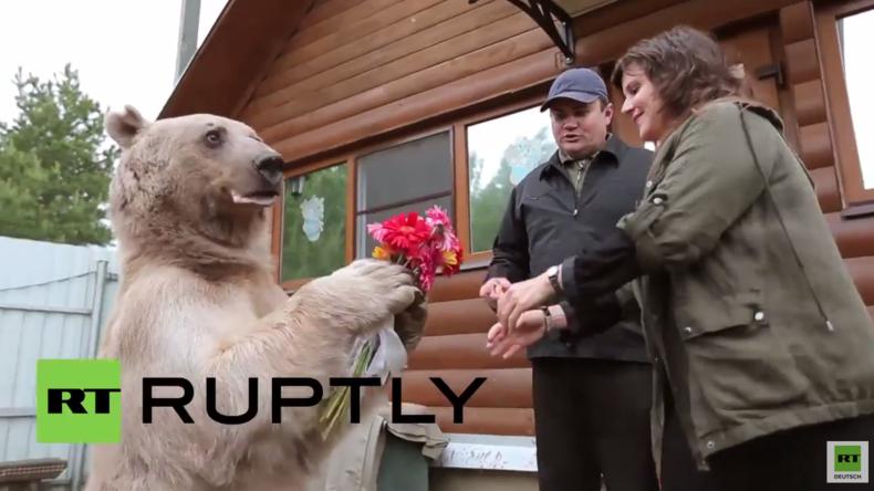 """""""Eine ganz normale russische Familie"""" - RT zu Besuch beim russischen Adoptivbären Stepan"""
