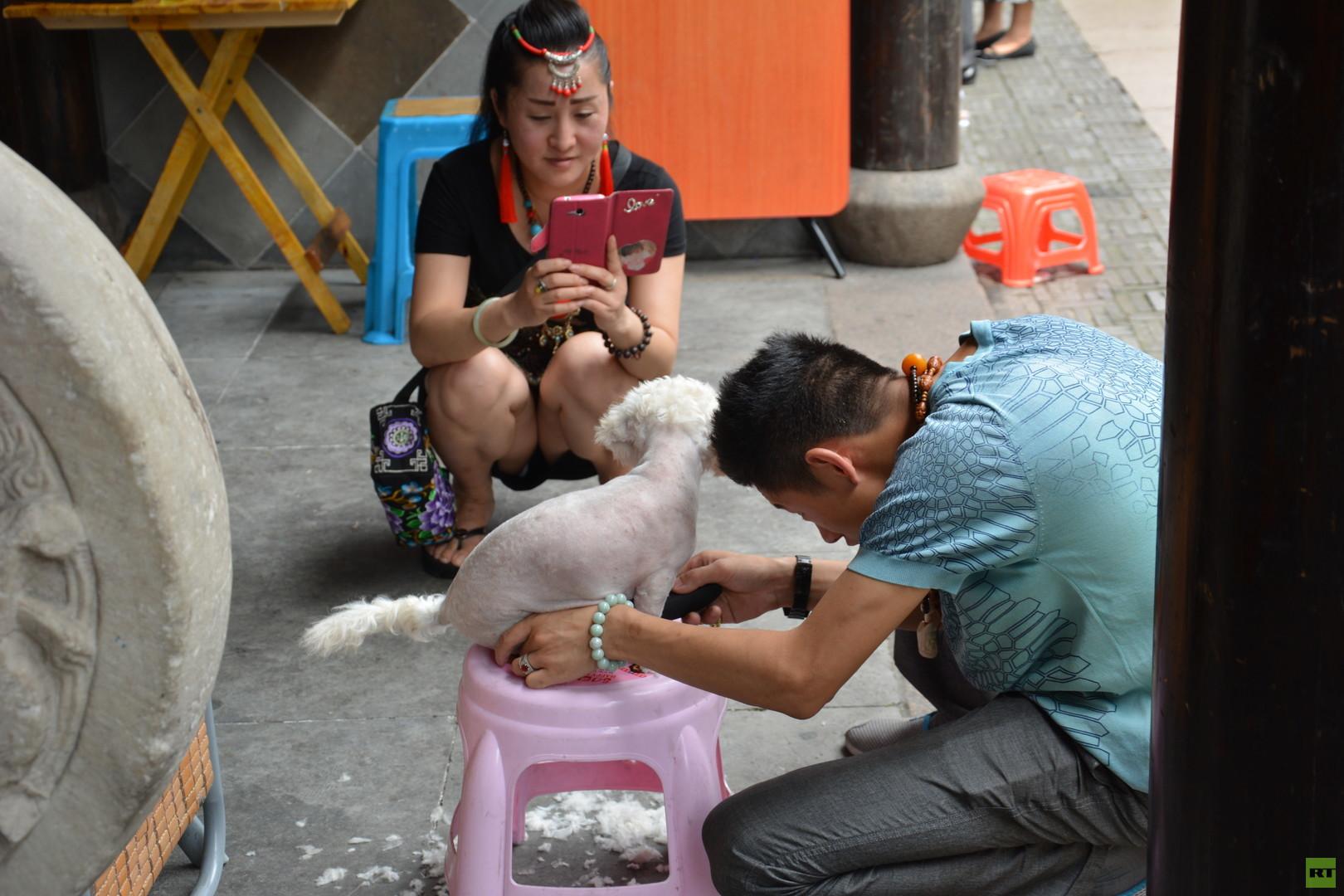 Die Chinesen im Hundefieber