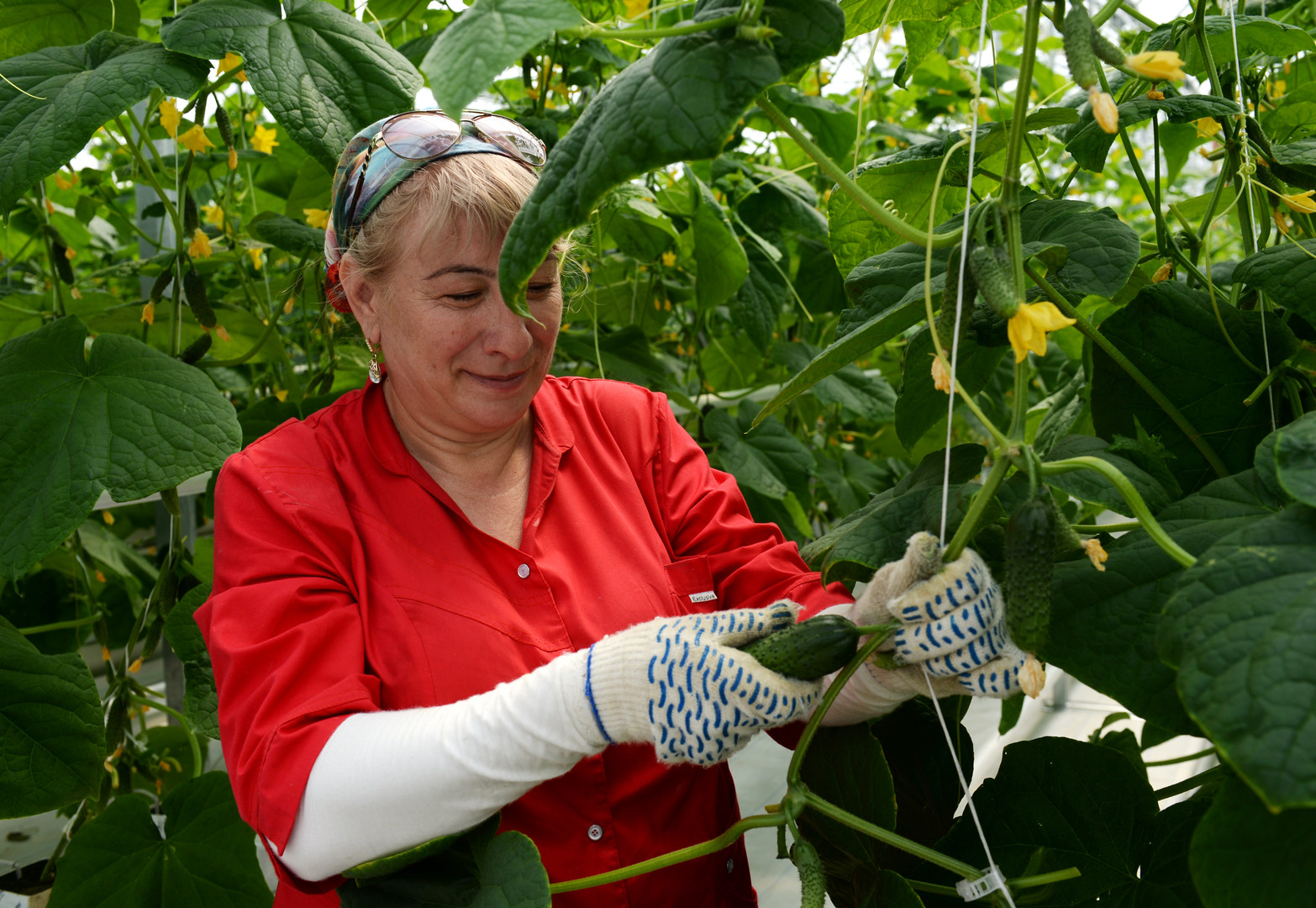 Russland verlängert Lebensmittelembargo bis Ende 2017 als Gegenmaßnahme zu EU-Sanktionen