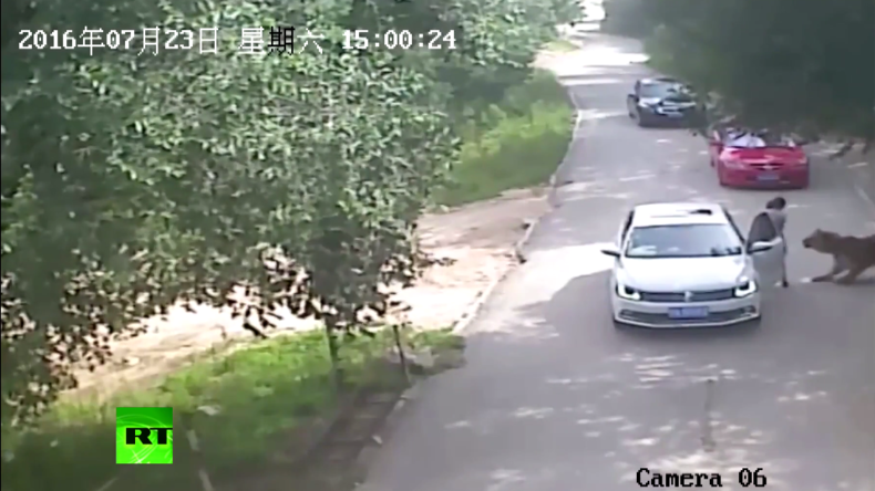 Safari-Park in China: Tiger greift Touristen an - Eine Tote und zwei Verletzte