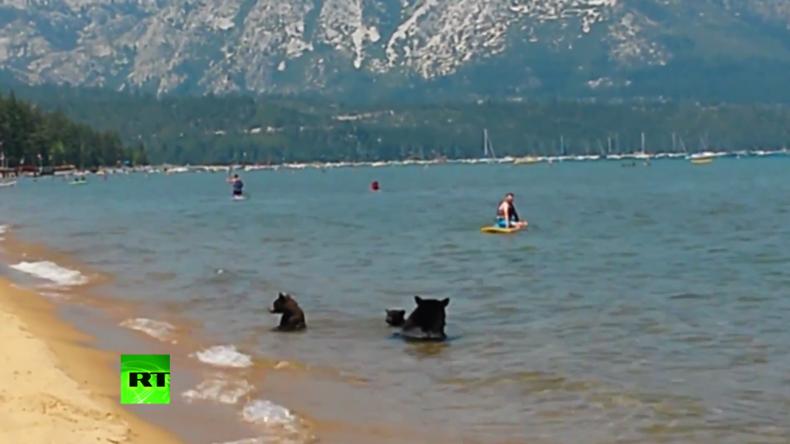 Ungewöhnliche Badegäste - Bärenfamilie gesellt sich zu Menschen am See und gönnt sich eine Abkühlung