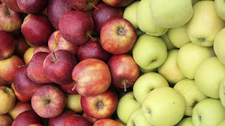 """""""Rekordernte und keiner kauft unsere Äpfel""""  - Polens Bauern wegen Russland-Sanktionen unter Druck"""