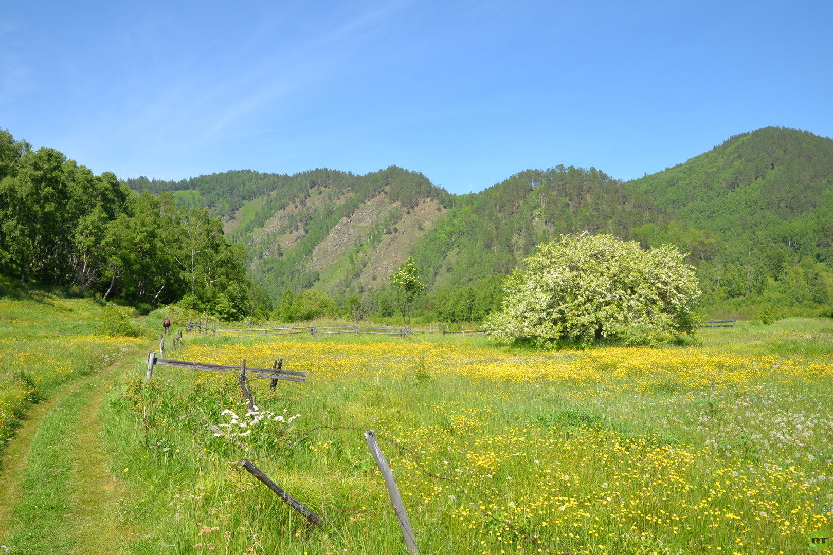 Reportage: Wo die Baikal-Möwen ihre Nester haben – Reise in ein russisches Naturparadies