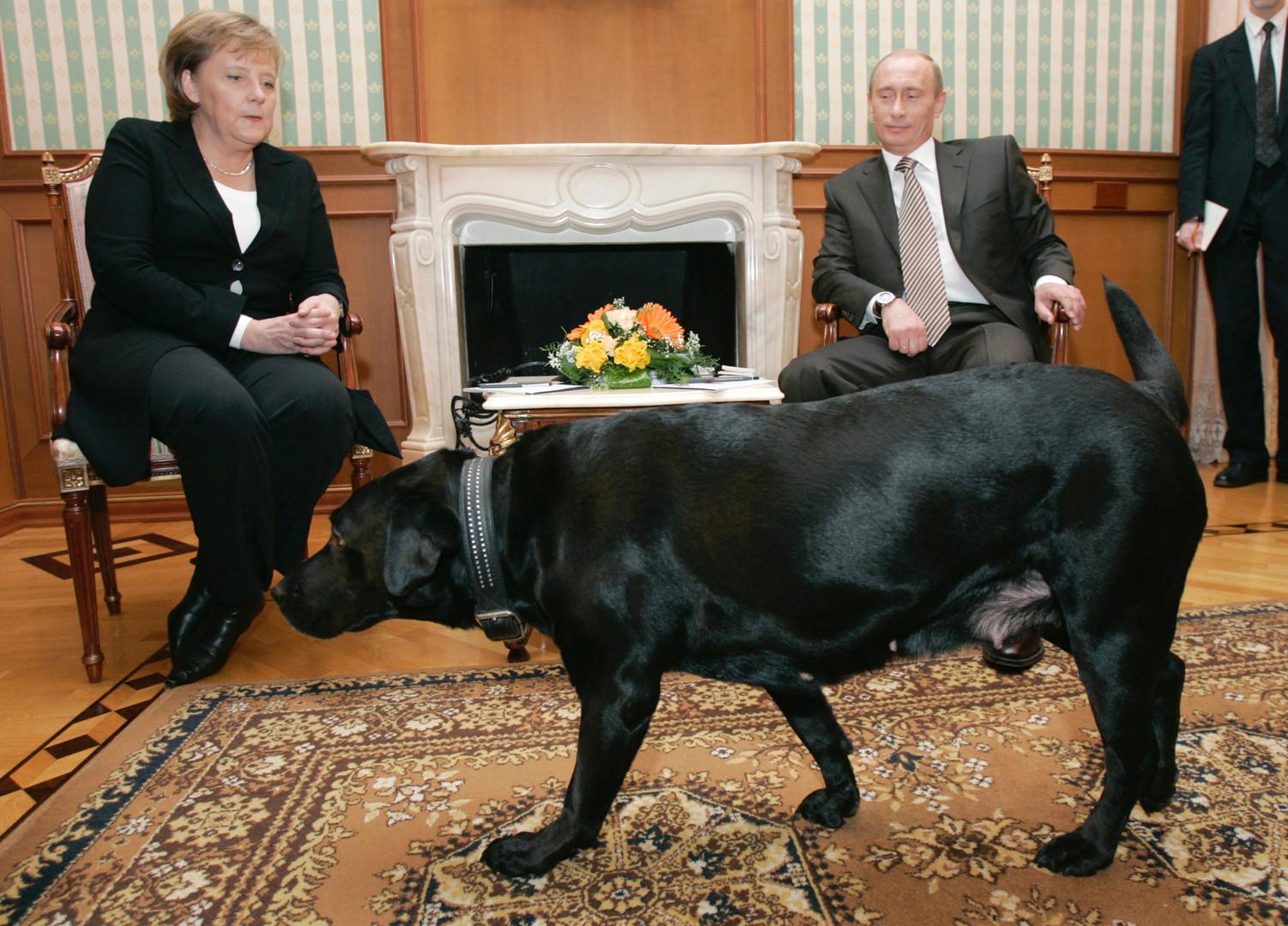 Nach Eklat mit Putins Hund - Merkel plötzlich von Hundephobie befreit?