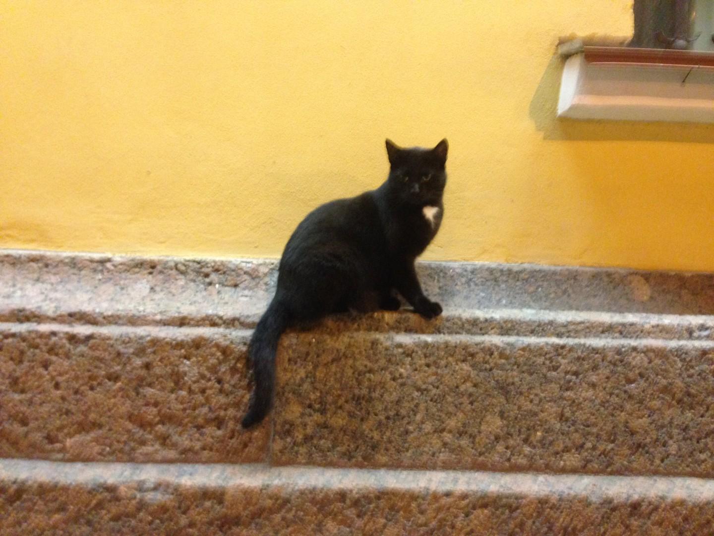 Anmutig wie eine Ballerina sitzt diese Katze auf einem Mauervorsprung und beobachtet die Passanten