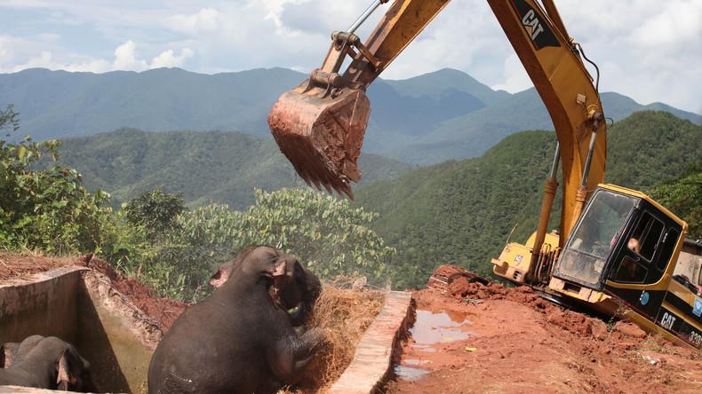 WWF: Zwei Drittel der Wildtiere sterben bis 2020 aus