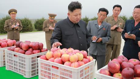 DATE IMPORTED: 18 September, 2016 Der nord-koreanische Präsident Kim besucht eine Apfelfarm der Kosan Combined Fruit Farm, Pyongyang, September 2016.