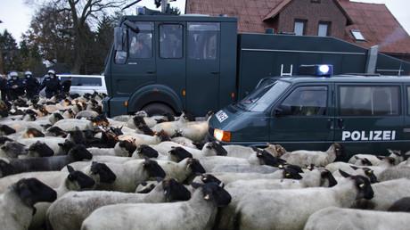 Deutsche Polizisten beim Versuch, die Straße von Schafen und Ziegen zu befreien. Laase, 8. November 2010.