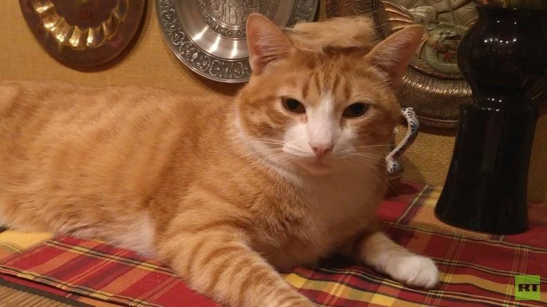 Instagram-Trend #TrumpYourCat: Katzen bekommen Trump-Frisur